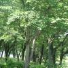 日常と自然と「こころ旅」