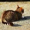【猫との対話#7】小さく始める〜人は「やらない理由」を考える天才〜