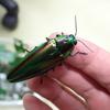 パークセンターの虫たち その2