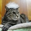 寒い時期の猫草の育て方「100円で作る保温箱」