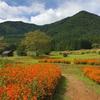国営アルプスあづみの公園、200万本のオレンジ色のコスモスが満開!
