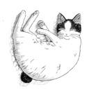 ネコのお告げ~占い・散歩・食養生~