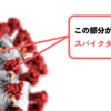 高校生物の知識で学ぶ新型コロナウイルスとmRNAワクチンの開発<前編>