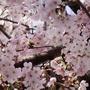 4月済州、花道に沿ってシャラルラ !