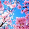 ラベルマップコーチから、朝の質問タイム 144「春といえば、」何をイメージしますか?