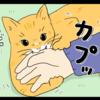 猫好きの猫への愛はいろいろなものを超越する(日常マンガ)