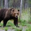 ロードバイクのライド中に熊と遭遇したら