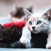 もふもふしたい!かわいい猫の種類を大特集【20選】