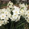 お墓参りと春の花たち