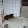 台湾・猫村近くのしょんぼり犬
