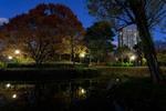 冬近づく、札幌・中島公園の夜。紅葉もそろそろ見納めかな。