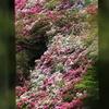京都府宇治市「三室戸寺」ツツジの咲くころ