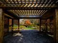 札幌市 百合が原公園の「世界の庭園」で紅葉撮影
