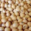 エクオールは大豆イソフラボン由来の成熟女性の強い味方