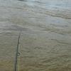 釣りができない覚悟で出かけた、増水の木曽川のサツキマス