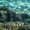 【観光レポート】サバイイ島の観光地を紹介!【北編】