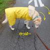 雨降りのお散歩