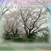 『 散るさくら忍びの月を幻視せん 』筑紫風575交心zqv0206