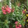 花いろいろ 羽生くんの番組
