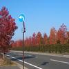 熊本北バイパス街路樹