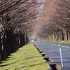 【滋賀】春が来る直前のメタセコイア並木ってどうなの!?近くのおしゃれカフェも紹介