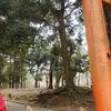 奈良公園探索