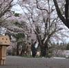 北斗市 北斗市の桜名所の戸切地陣屋跡