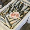 2018年3月22日 小浜漁港 お魚情報