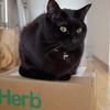 今日の黒猫モモ&白黒猫ナナの動画ー958