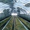 本と写真と農業と、ときどき収益化
