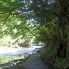 養老渓谷で自然を満喫!ハイキングコースと周辺の観光情報【千葉・市原市/大多喜町】
