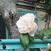 坂研究メモ No.9  岩手県の坂(5)ー「もりおかの坂」(イワテライフ日記 iwatelife.blog.fc2.com)への共感