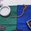 カナヘビの飼育ケースを春仕様に替えました