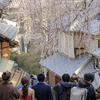 産寧坂(三年坂)のしだれ桜