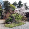 北海道神宮の桜と梅