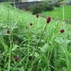 秋の花野のセチメンタル