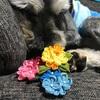 【つまみ細工】色とりどりの紫陽花!!そして、全然モデルになってくれないシュナ