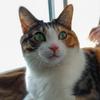【愛猫日記】毎日アンヌさん#160