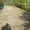 雑草との戦いの必須アイテムは、充電式草刈り機とグリホサート除草剤