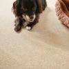 ファブリックフロア~ペットと子どもに優しい床材を敷いてきました。