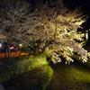 京都の桜(その3)
