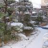 今日の佐賀は、朝起きたら、雪が積もっていました。
