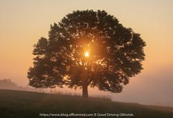 牧草地に佇む一本の木