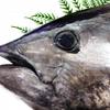 【マグロ】沖縄でパヤオ釣りを体験!