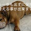 川崎市では保険証の切り替えが家から一歩も出ずに出来るよ!