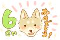 柴犬、6歳の誕生日