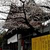 桜の頃の増上寺と東京タワーと東京プリンスホテル
