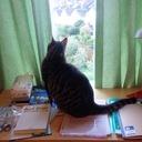 kazutreeの日記