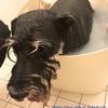 愛犬・大河の朝風呂♨︎