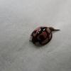 冬に見かけた虫たち その2 と旬の梅